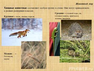 Животный мир Хищные животные составляют особую группу в степи. Они могут принадл