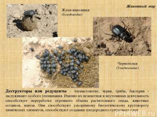 Животный мир Деструкторы или редуценты – членистоногие, черви, грибы, бактерии -