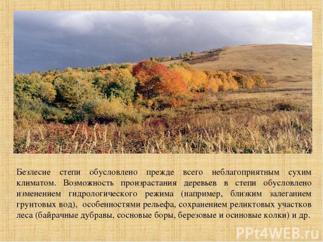 Безлесие степи обусловлено прежде всего неблагоприятным сухим климатом. Возможность произрастания деревьев в степи обусловлено изменением гидрологического режима (например, близким залеганием грунтовых вод), особенностями рельефа, сохранением реликт…