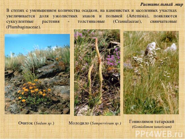 Растительный мир В степях с уменьшением количества осадков, на каменистых и засоленных участках увеличивается доля узколистных злаков и полыней (Artemisia), появляются суккулентные растения - толстянковые (Crassulaceae), свинчатковые (Plumbaginaceae…