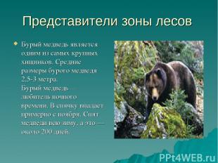 Представители зоны лесов Бурый медведь является одним изсамых крупных хищников.