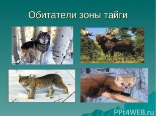 Обитатели зоны тайги
