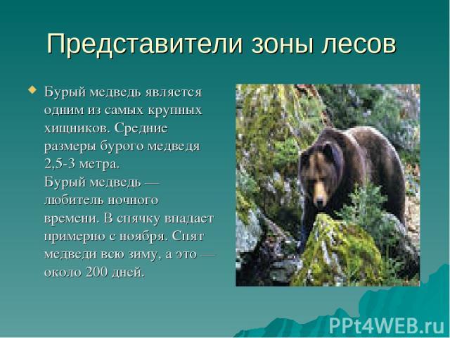 Представители зоны лесов Бурый медведь является одним изсамых крупных хищников. Средние размеры бурого медведя 2,5-3метра. Бурый медведь — любитель ночного времени. Вспячку впадает примерно сноября. Спят медведи всю зиму, аэто— около 200дней.