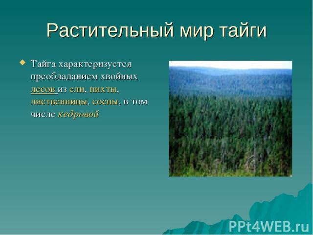 Растительный мир тайги Тайга характеризуется преобладанием хвойных лесов из ели, пихты, лиственницы, сосны, в том числе кедровой