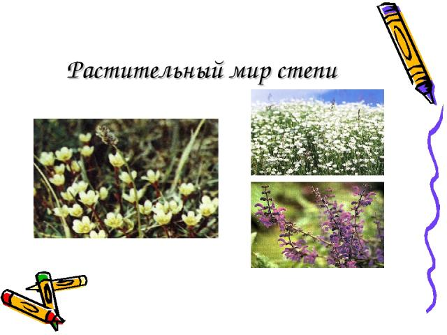 Растительный мир степи