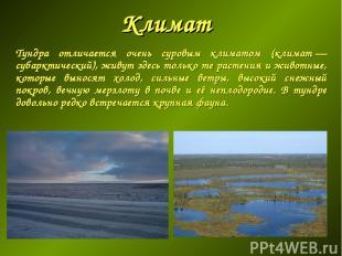 Климат Тундра отличается очень суровым климатом (климат— субарктический), живут