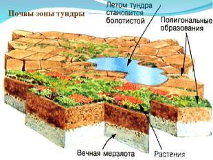 Почвы зоны тундры
