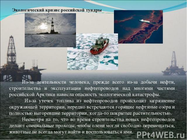 Экологический кризис российской тундры Из-за деятельности человека, прежде всего из-за добычи нефти, строительства и эксплуатации нефтепроводов над многими частями российской Арктики нависла опасность экологической катастрофы. Из-за утечек топлива и…
