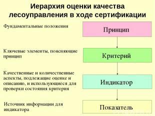 Иерархия оценки качества лесоуправления в ходе сертификации