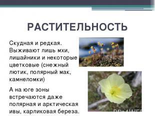 РАСТИТЕЛЬНОСТЬ Скудная и редкая. Выживают лишь мхи, лишайники и некоторые цветко