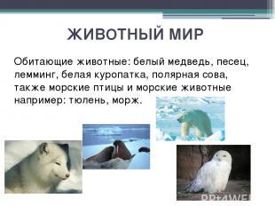 ЖИВОТНЫЙ МИР Обитающие животные: белый медведь, песец, лемминг, белая куропатка,