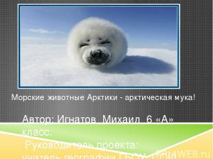 Морские животные Арктики - арктическая мука! Автор: Игнатов Михаил 6 «А» класс.