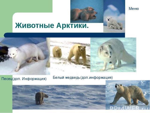 Животные Арктики. Песец(доп. Информация) Белый медведь(доп.информация) Меню