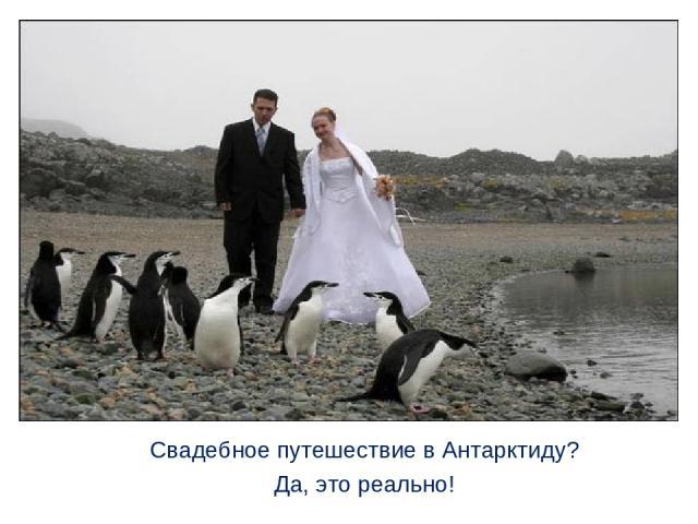 Свадебное путешествие в Антарктиду? Да, это реально!