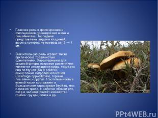 Главная роль в формировании фитоценозов принадлежит мхам и лишайникам. Последние