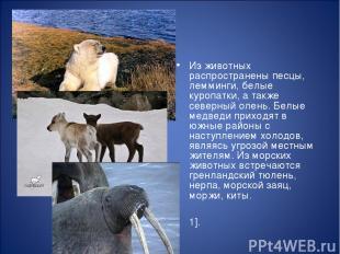 Из животных распространены песцы, лемминги, белые куропатки, а также северный ол
