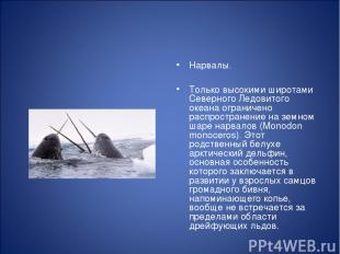 Нарвалы. Только высокими широтами Северного Ледовитого океана ограничено распрос