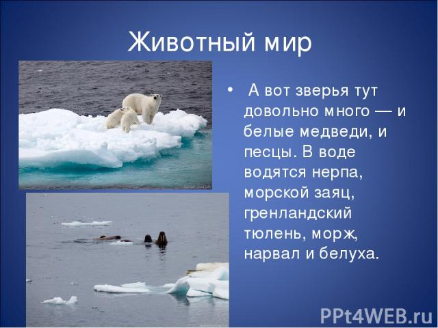 Животный мир А вот зверья тут довольно много — и белые медведи, и песцы. В воде водятся нерпа, морской заяц, гренландский тюлень, морж, нарвал и белуха.