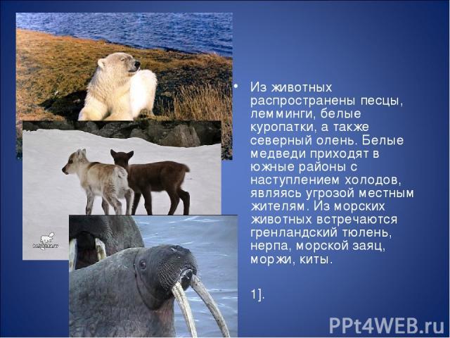 Из животных распространены песцы, лемминги, белые куропатки, а также северный олень. Белые медведи приходят в южные районы с наступлением холодов, являясь угрозой местным жителям. Из морских животных встречаются гренландский тюлень, нерпа, морской з…