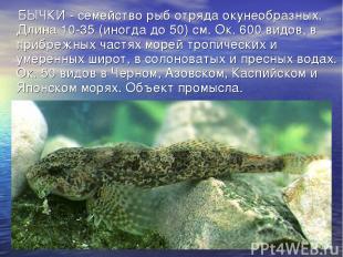 БЫЧКИ - семейство рыб отряда окунеобразных. Длина 10-35 (иногда до 50) см. Ок. 6