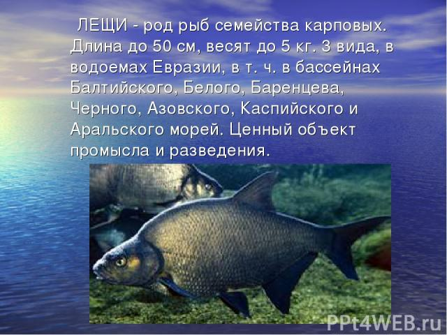 ЛЕЩИ - род рыб семейства карповых. Длина до 50 см, весят до 5 кг. 3 вида, в водоемах Евразии, в т. ч. в бассейнах Балтийского, Белого, Баренцева, Черного, Азовского, Каспийского и Аральского морей. Ценный объект промысла и разведения.