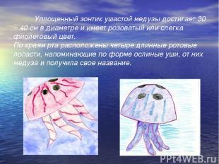 Уплощенный зонтик ушастой медузы достигает 30 – 40 см в диаметре и имеет розоват
