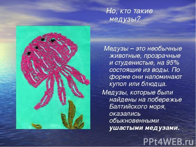 Но, кто такие медузы? Медузы – это необычные животные, прозрачные и студенистые, на 95% состоящие из воды. По форме они напоминают купол или блюдца. Медузы, которые были найдены на побережье Балтийского моря, оказались обыкновенными ушастыми медузами.
