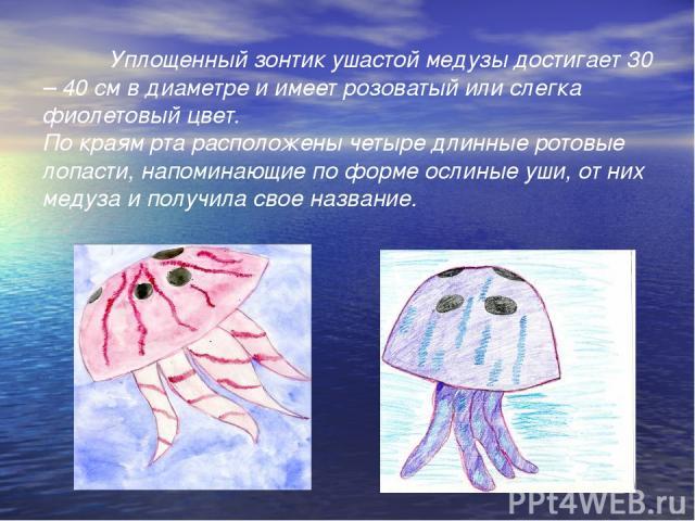 Уплощенный зонтик ушастой медузы достигает 30 – 40 см в диаметре и имеет розоватый или слегка фиолетовый цвет. По краям рта расположены четыре длинные ротовые лопасти, напоминающие по форме ослиные уши, от них медуза и получила свое название.