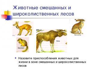 Животные смешанных и широколиственных лесов Назовите приспособления животных для