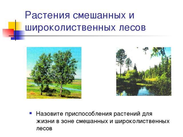 Растения смешанных и широколиственных лесов Назовите приспособления растений для жизни в зоне смешанных и широколиственных лесов