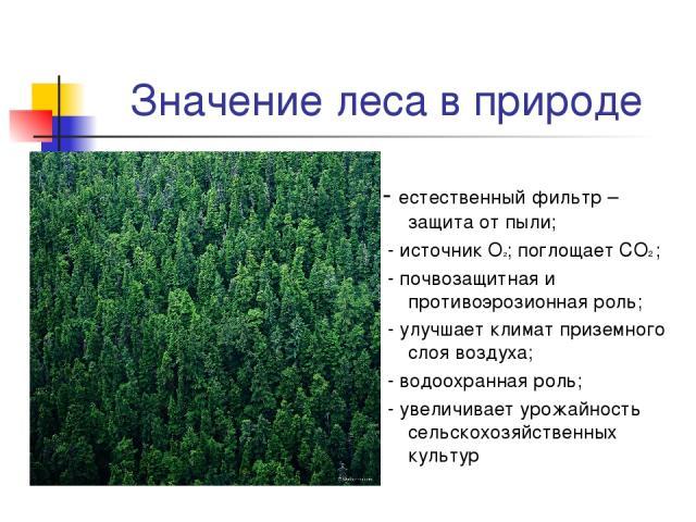 Значение леса в природе - естественный фильтр – защита от пыли; - источник О2; поглощает СО2 ; - почвозащитная и противоэрозионная роль; - улучшает климат приземного слоя воздуха; - водоохранная роль; - увеличивает урожайность сельскохозяйственных культур