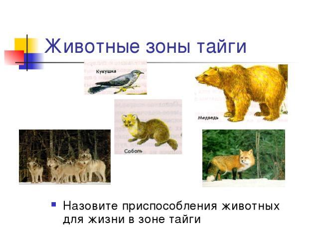 Животные зоны тайги Назовите приспособления животных для жизни в зоне тайги
