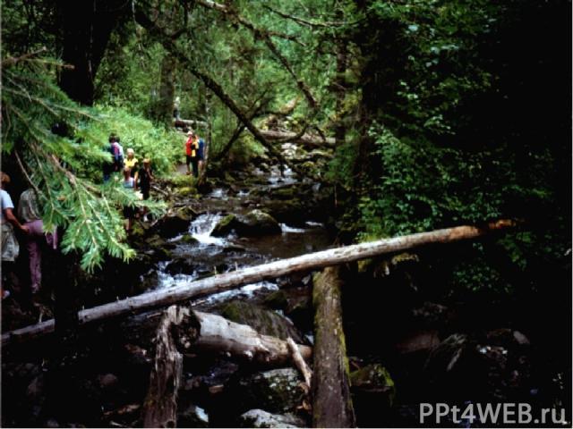 Мутная вода со страшным грохотом и огромной скоростью мчится вниз по узкому каменистому руслу, увлекая за собой все, что попадается на пути. Огромные деревья вода ломает, как тонкие палочки, крошит их, уносит вниз.