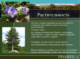 Растительность Лугово-степная травянистая растительность открытых пространств зд