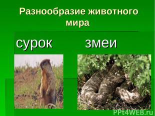 Разнообразие животного мира сурок змеи