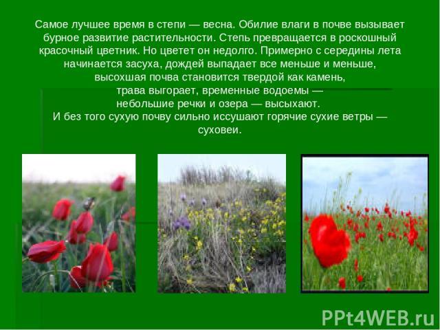 Самое лучшее время в степи — весна. Обилие влаги в почве вызывает бурное развитие растительности. Степь превращается в роскошный красочный цветник. Но цветет он недолго. Примерно с середины лета начинается засуха, дождей выпадает все меньше и меньше…