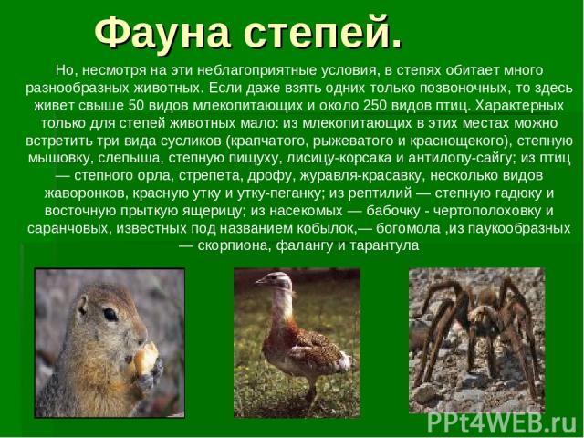 Но, несмотря на эти неблагоприятные условия, в степях обитает много разнообразных животных. Если даже взять одних только позвоночных, то здесь живет свыше 50 видов млекопитающих и около 250 видов птиц. Характерных только для степей животных мало: из…