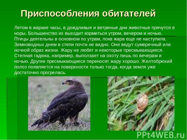 Летом в жаркие часы, в дождливые и ветреные дни животные прячутся в норы. Большинство их выходит кормиться утром, вечером и ночью. Птицы деятельны в основном по утрам, пока жара еще не наступила. Земноводных днем в степи почти не видно. Они ведут су…