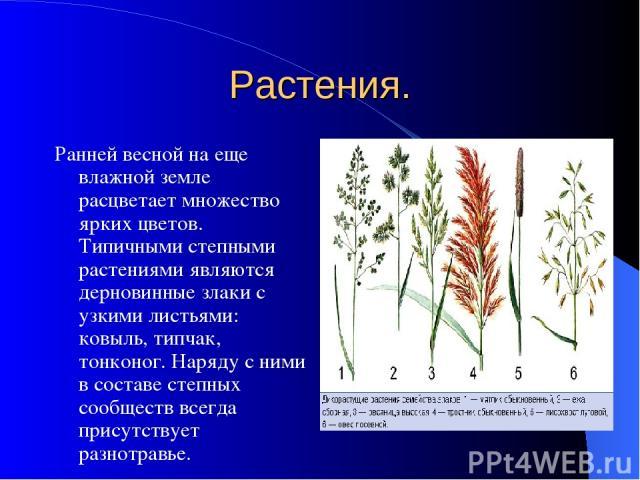Растения. Ранней весной на еще влажной земле расцветает множество ярких цветов. Типичными степными растениями являются дерновинные злаки с узкими листьями: ковыль, типчак, тонконог. Наряду с ними в составе степных сообществ всегда присутствует разно…