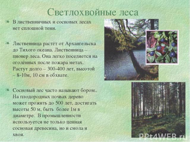 Светлохвойные леса В лиственничных и сосновых лесах нет сплошной тени. Лиственница растёт от Архангельска до Тихого океана. Лиственница – пионер леса. Она легко поселяется на оголённых после пожара метах. Растут долго – 300-400 лет, высотой – 8-10м,…