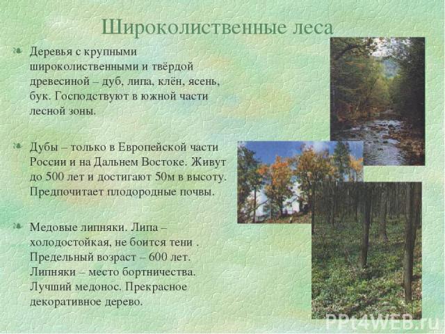 Широколиственные леса Деревья с крупными широколиственными и твёрдой древесиной – дуб, липа, клён, ясень, бук. Господствуют в южной части лесной зоны. Дубы – только в Европейской части России и на Дальнем Востоке. Живут до 500 лет и достигают 50м в …