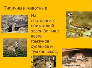 Типичные животные Из постоянных обитателей здесь больше всего грызунов: сусликов