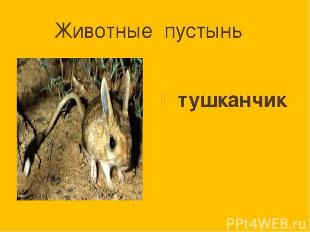 Животные пустынь тушканчик