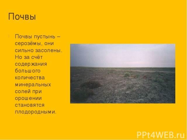 Почвы Почвы пустынь – серозёмы, они сильно засолены. Но за счёт содержания большого количества минеральных солей при орошении становятся плодородными.