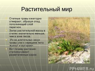 Растительный мир Степные травы ежегодно отмирают, образуя опад, пополняющий слой
