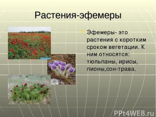 Растения-эфемеры Эфемеры- это растения с коротким сроком вегетации. К ним относя