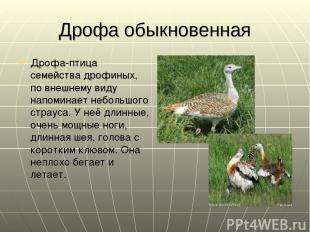 Дрофа обыкновенная Дрофа-птица семейства дрофиных, по внешнему виду напоминает н