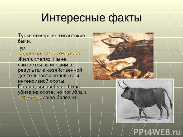 Интересные факты Туры- вымершие гигантские быки. Тур — парнокопытное животное. Жил в степях. Ныне считается вымершим в результате хозяйственной деятельности человека и интенсивной охоты. Последняя особь не была убита на охоте, но погибла в 1627 году…