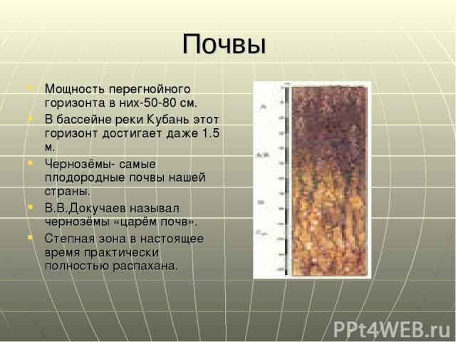 Почвы Мощность перегнойного горизонта в них-50-80 см. В бассейне реки Кубань этот горизонт достигает даже 1.5 м. Чернозёмы- самые плодородные почвы нашей страны. В.В.Докучаев называл чернозёмы «царём почв». Степная зона в настоящее время практически…