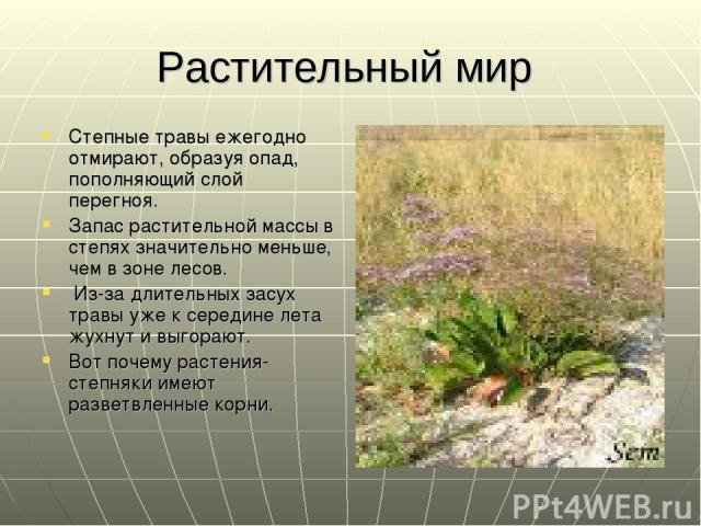 Растительный мир Степные травы ежегодно отмирают, образуя опад, пополняющий слой перегноя. Запас растительной массы в степях значительно меньше, чем в зоне лесов. Из-за длительных засух травы уже к середине лета жухнут и выгорают. Вот почему растени…